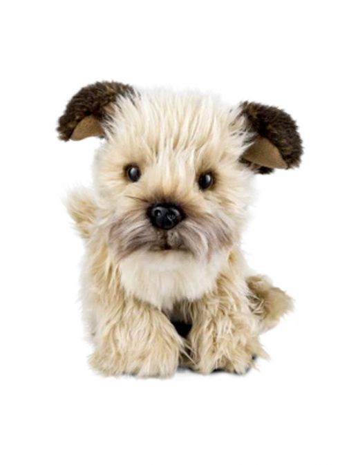 Front shot of the Living Nature Medium Border Terrier