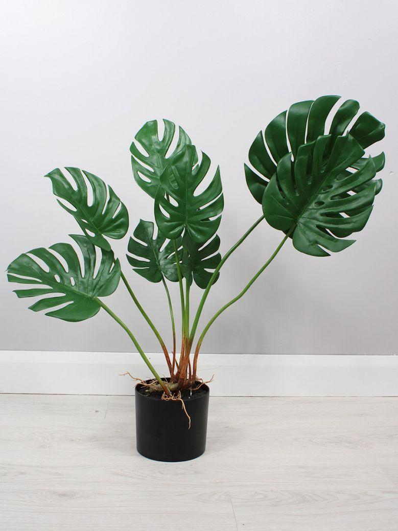 Ornamental Potted Split Leaf Plant