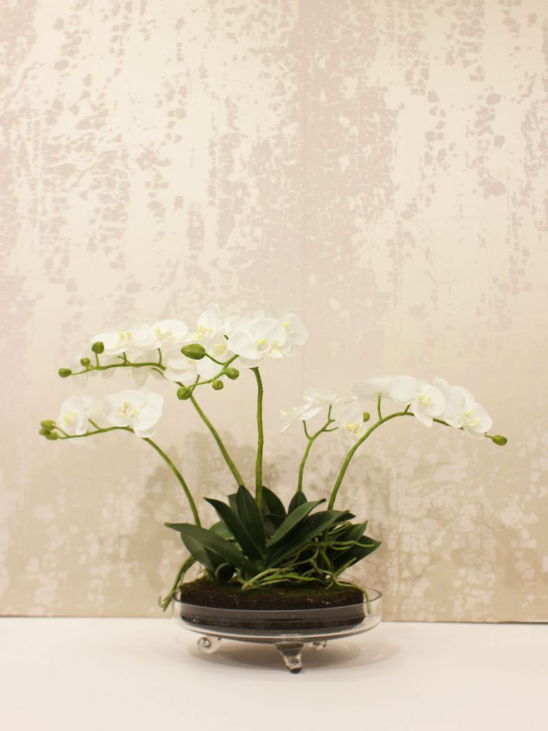 White Small Orchid Phalaenopsis Plants Arrangement in Glass Bowl with Feet
