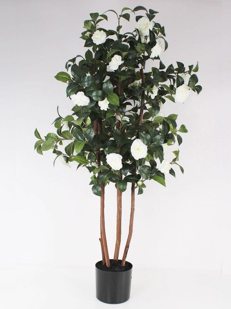 Ornamental White Camelia Tree in Black Pot