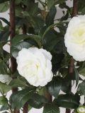 closeup shot of the Ornamental White Camelia flowers
